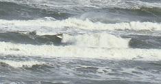 100308tomo-wave2.jpg