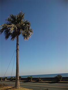 2011wada-tree.jpg