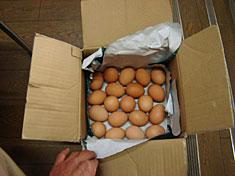 kazuo-egg.jpg